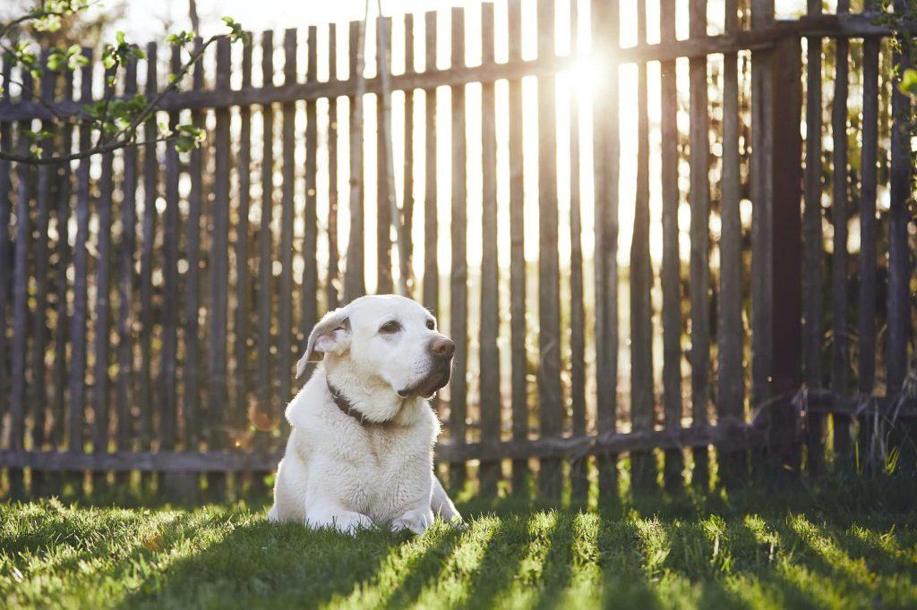 שער לכלב