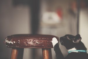מתקן גירוד לחתול